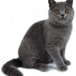 Oddawanie Bogu czci w duchu i prawdzie, czyli o roli kota w medytacji